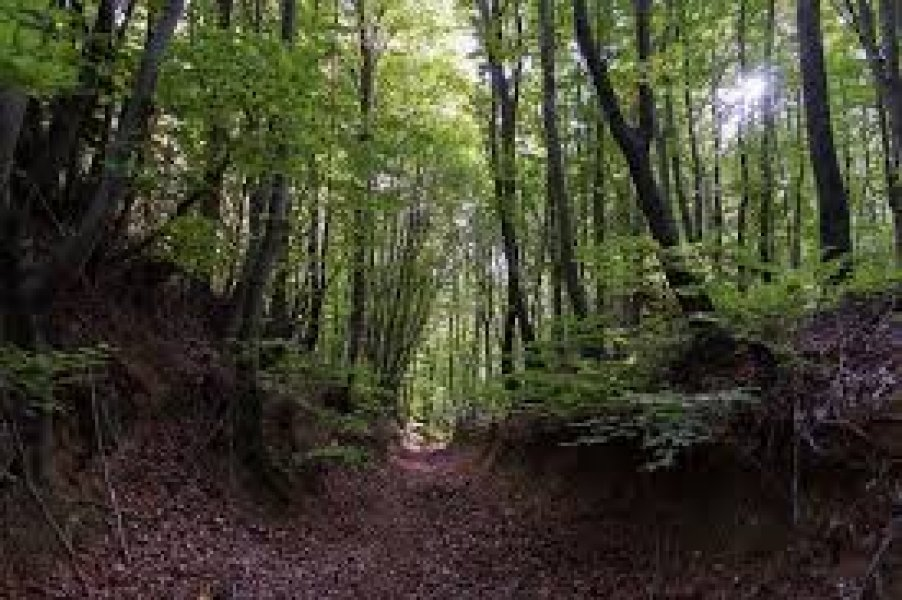 Dupnisa Mağarası & İğneada Turu