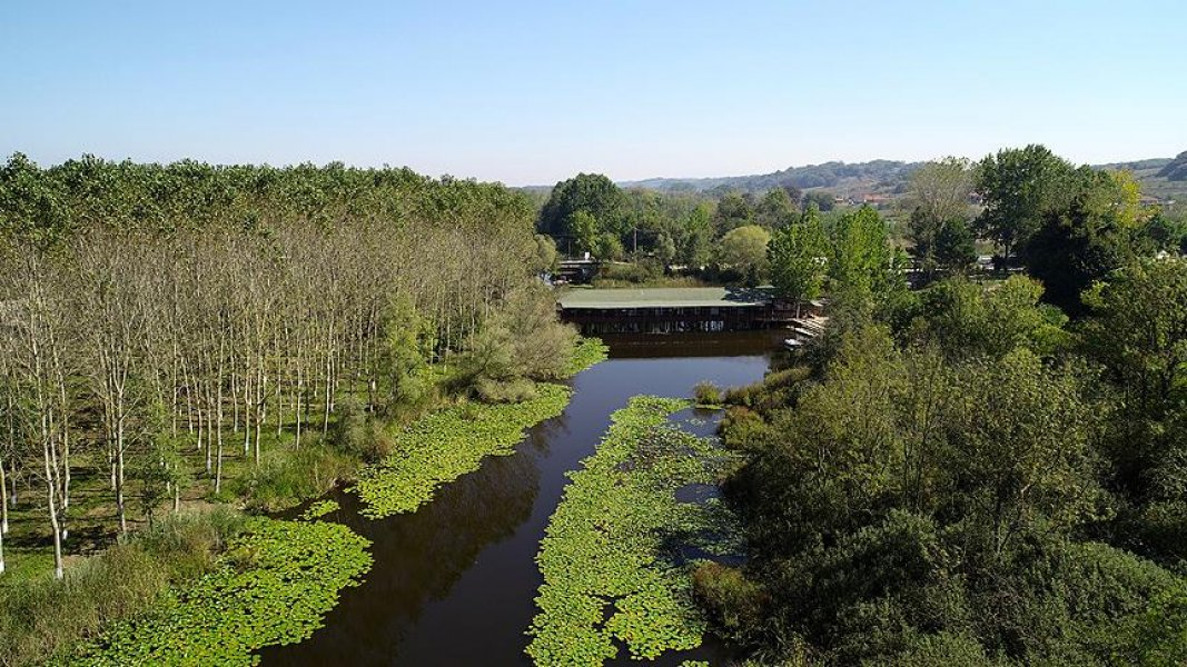 Poyrazlar Gölü Longoz Ormanları Akçakoca Turu
